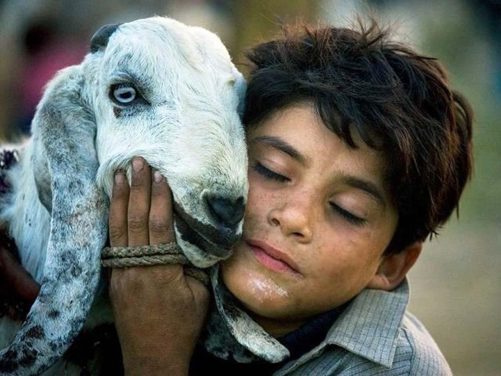 love-my-goat
